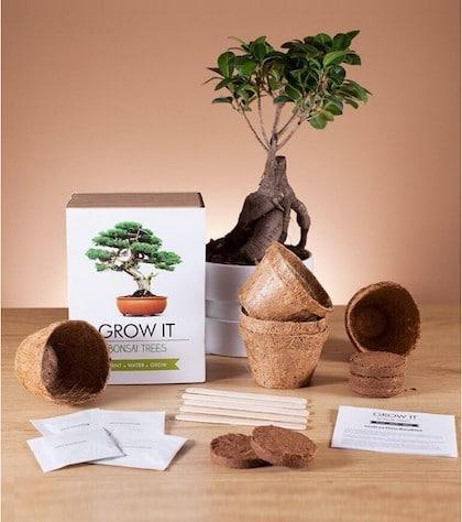 kit de plantation pour bonsai